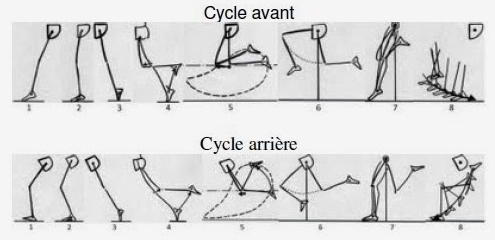 cycle avant cycle arriere 3